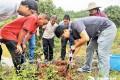 市人大代表热议红火蚁入侵伤人 科技特派员到乡村为村民支招