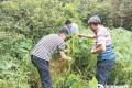 东源药用野生稻或设自然保护区保护 专家建议让农民参与保护
