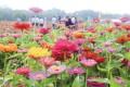 春回大地花盛开,出游环境趋好 赏花游热度上涨280%