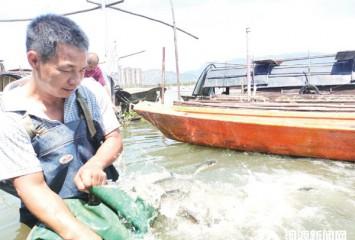 开展渔业增殖放流活动